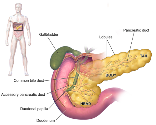 Surgical Oncology Program Pancreatic Cysts