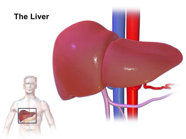 Liver Cancer Symptoms In Females